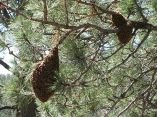 Swarm In Tree
