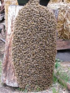 Swarm On Log